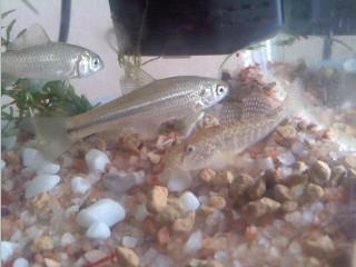 3種の淡水魚