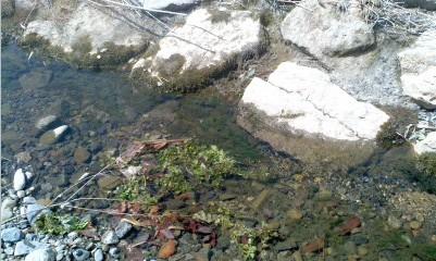 ヤマメがいた川