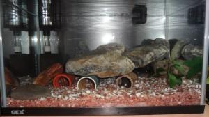 ナマズ水槽のレイアウト