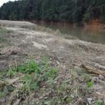 自然の脅威。川の氾濫後の様子とナマズ発見